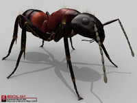 3d model of ant camponotus obscuripes