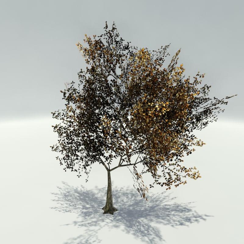3d ready trees autumn
