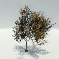 3d ready trees autumn