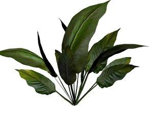 tropical shrub max