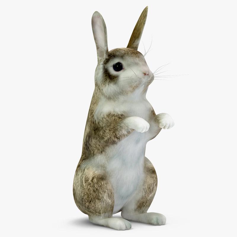 rabbit v2 3d model