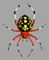 3d model marbled spider
