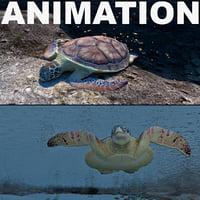 turtle chelonia mydas max