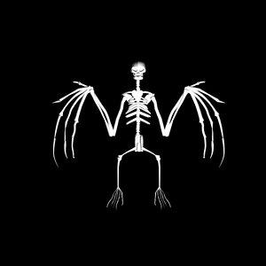 3d bat skeleton model