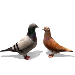 3d model birds pigeons