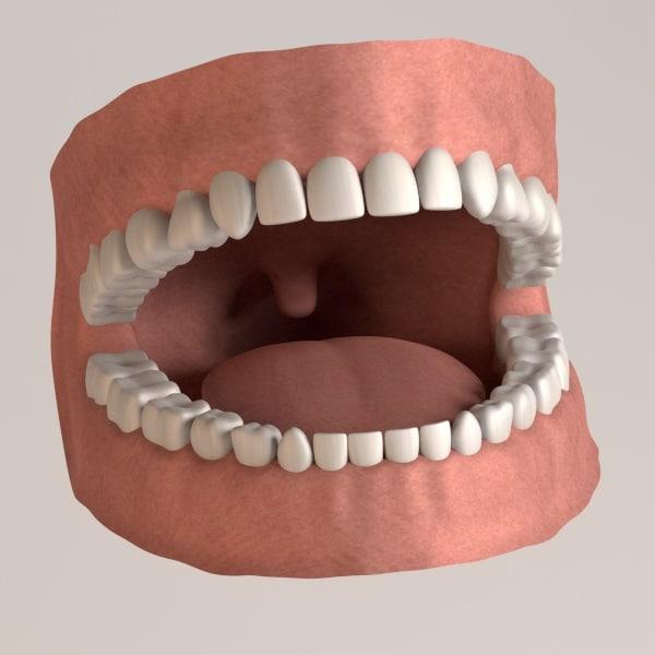 permanent human teeth 3d 3ds