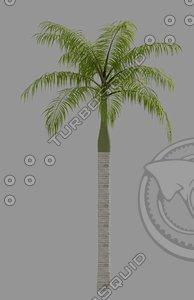 royal palm max