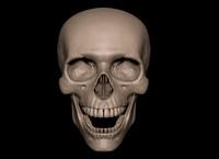3d obj human skull