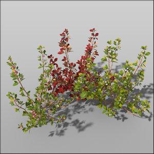 3d blueberry shrub berries