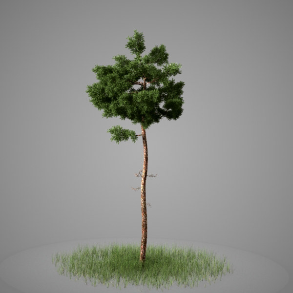 3d max conifer tree