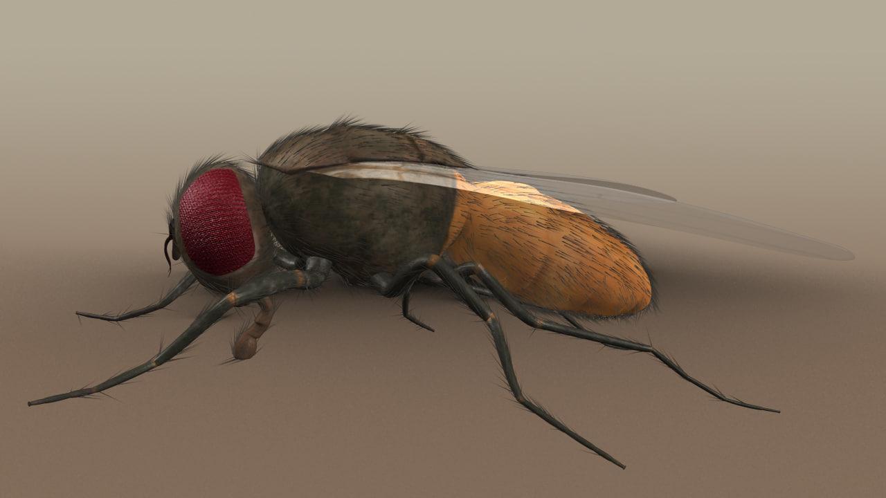 3d model housefly fly