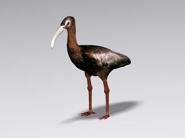 3ds white faced ibis