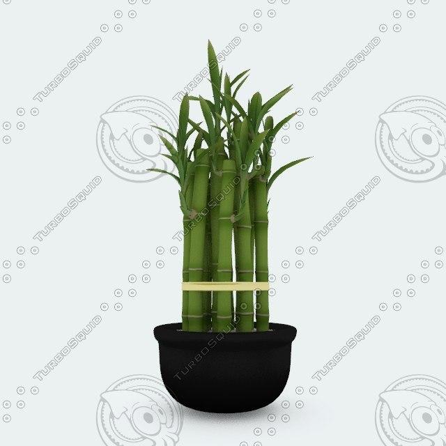 3d lucky bamboo pot plant model