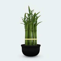 3d lucky bamboo pot plant model