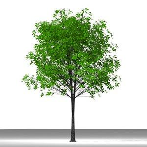 plane tree 3ds