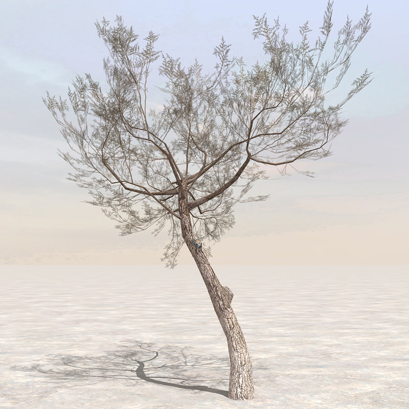3d model tree afghanistan 05