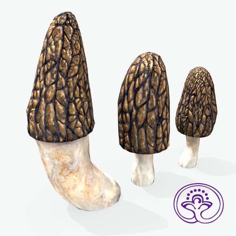morchella conica max