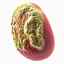 Inchnovirus 3D models