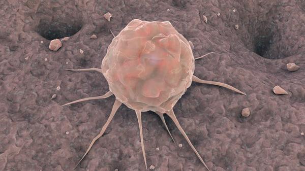 3d stem cell bone animation model