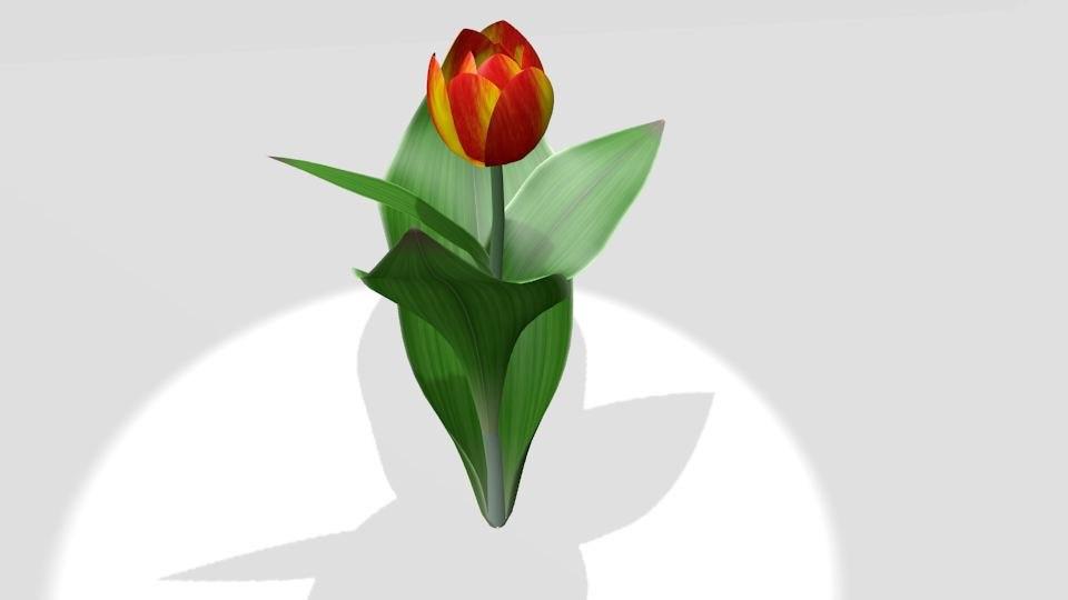 3d small tulip model