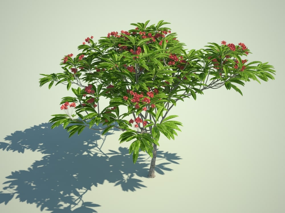 tropical flowering tree landscape max