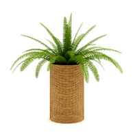 3d model of fern wicker basket