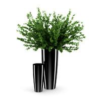 3d plant black pot model