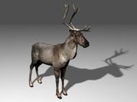 reindeer deer 3d max