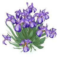 iris germanica german flowers 3d max