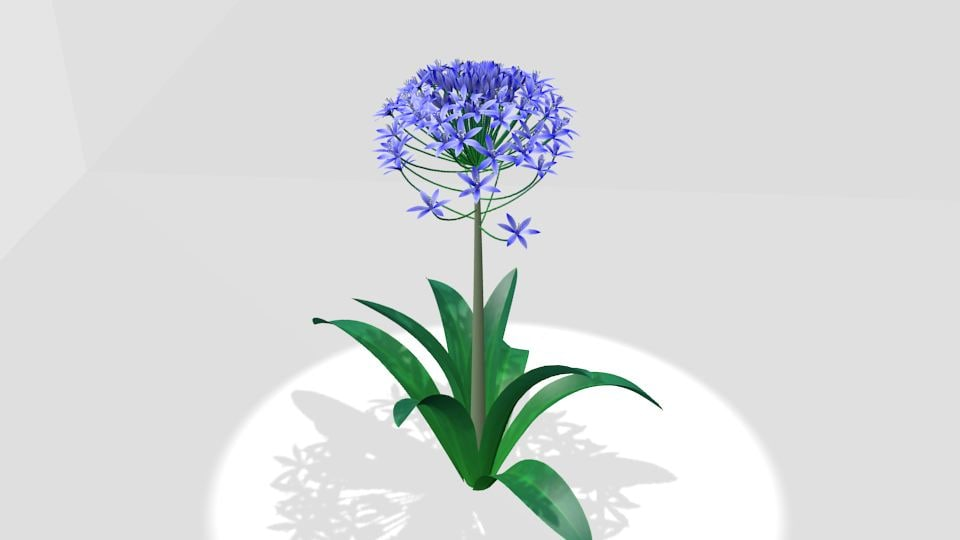 portuguese squill 3d model