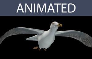3d model seagull flying