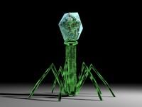 t4 virus 3d model