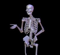 body skeleton blend free