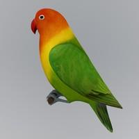 Lovebird (Agapornis fischeri)