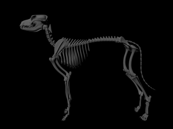 3d model dog skeletal