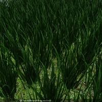 max grass