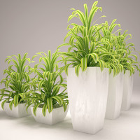 3dsmax green plant vase