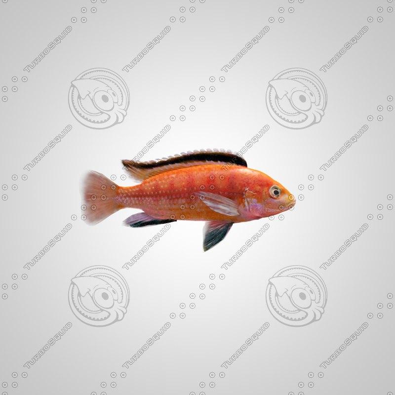3ds max fish labidochromis colybry