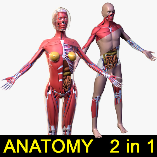 max human male female body