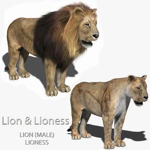 lion lioness fur 3d obj