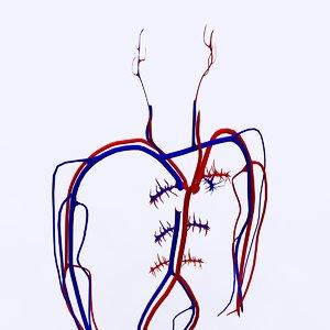 3d model basic circulatory 2010