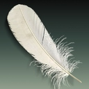 feather 3D models