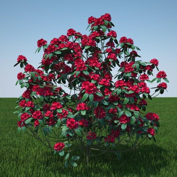 c4d plant flowers