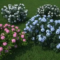 pack hydrangea flower c4d