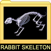 rabbit skeleton bones 3ds