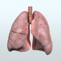 3ds max realistic human respiratory