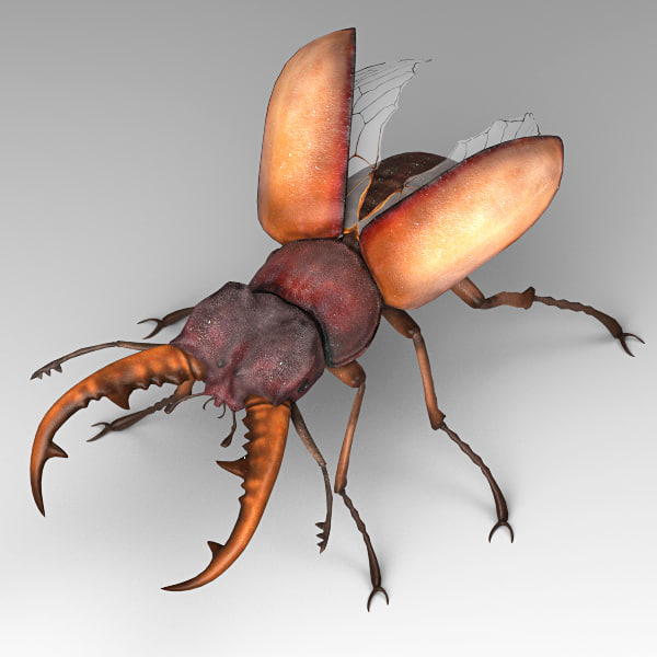 stag beetle 3d 3ds