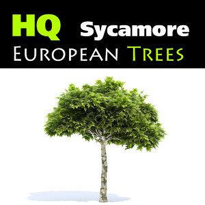 3d obj european sycamore tree