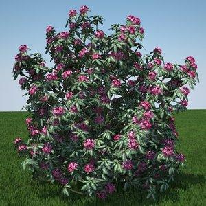 plant flowers 3d c4d