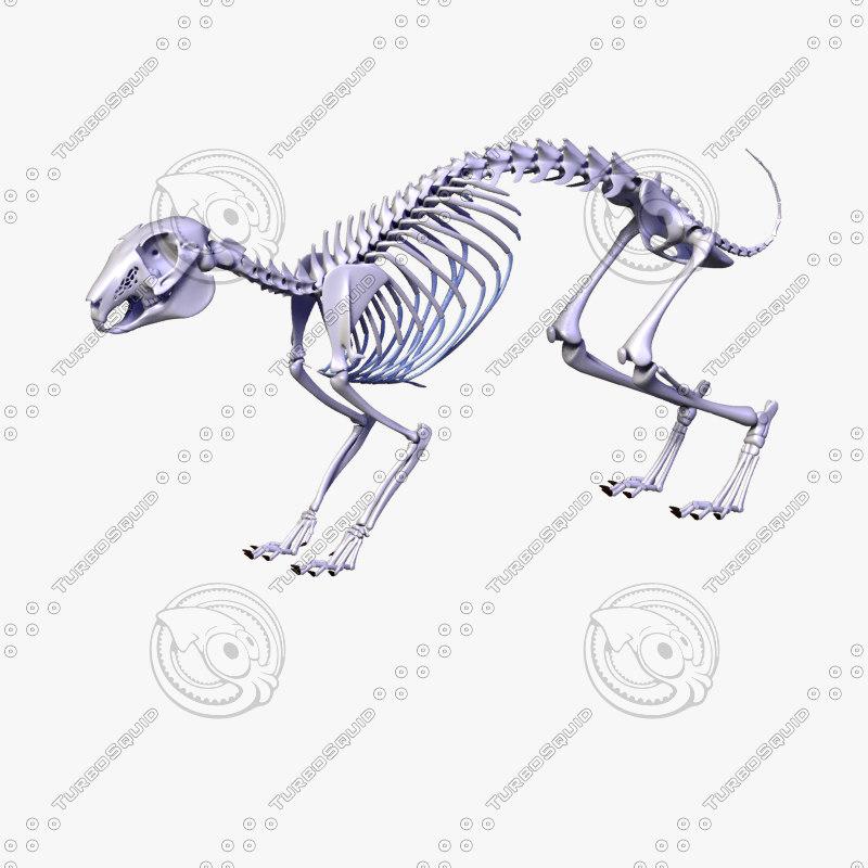 Rabbit Skeleton Bones 3ds